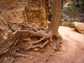 Tree Roots Cling To Crumbling Sandstone