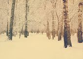 frozen woods covered with snow, retro filtered, instagram style