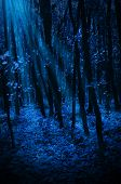 Night forest with moonlight rays