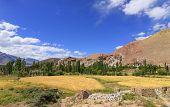 Wheat Farming At Ladakh
