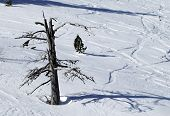 Lonely Tree With No Leaves In The Snow During The Winter