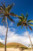 Palm Trees And Moai