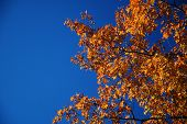 Fall_Leaves_and_Sky