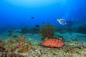Coral Grouper on underwater reef