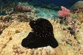 Underwater snail shell