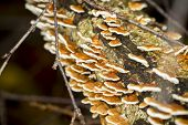 A Group Of Mushrooms On A Rotten Tree Trunk
