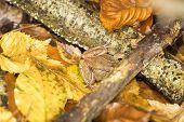 Brown Frog Hidden Between Autumn Leaves