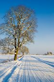 Winter Road In The Countryside