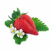 Strawberry with leaf and strawberry flowers