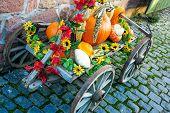 Colorful pumpkins at a farm
