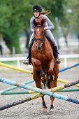Horse Jumping Hurdles