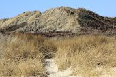 Dunes In South Of The Island Of Sylt
