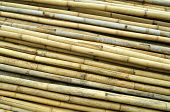 Bamboos for scaffolding