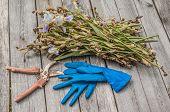 Faded Irises And Secateurs