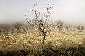 Winter fruit trees, Munebrega, Zaragoza, Aragon, Spain