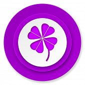 four-leaf clover icon, violet button