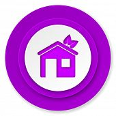 house icon, violet button, ecological home symbol