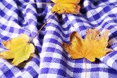 Autumn leaves on plaid close-up