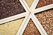 picture of millet  - variety of gluten free grains  - JPG