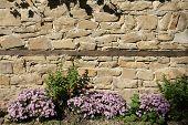stone wall - 19