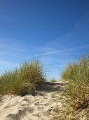 Marram Grass On Dune At North Sea, Blue Sky