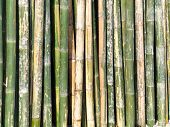 stock photo of bamboo forest  - Zen natural wall green bamboo background in forest - JPG