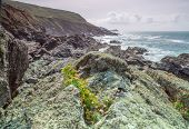 picture of st ives  - Stunning cornish coast path along the rocky scenery from st ives to zennor in cornwall england uk - JPG