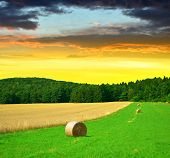 stock photo of hay bale  - Big hay bale rolls in a lush green field at sunset - JPG