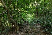 picture of jungle  - Deep jungle in Cat Ba island - JPG