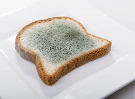 foto of spores  - Mould growing rapidly on mouldy bread in green and white spores - JPG