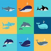 picture of dolphins  - Vector set of whale - JPG