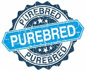 Purebred Blue Round Grunge Stamp On White poster