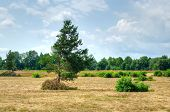 stock photo of dry grass  - Field with dried grass bushes and trees - JPG