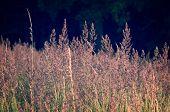 stock photo of dry grass  - Close - JPG