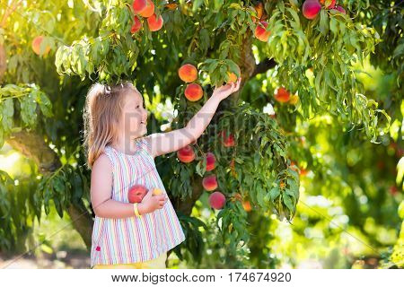 poster of Child Picking And Eating Peach From Fruit Tree