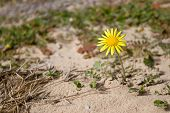 Blume #1