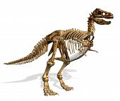 picture of dinosaur skeleton  - 3D render of a Tyrannosaurus Rex skeleton isloated on white - JPG