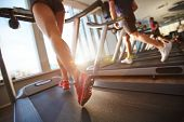 Low-angle view of male and female legs running on treadmill in gym on sunny day poster