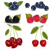 Photo-realistic vector illustration. Group of berries.