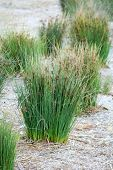 Grass For Landscaping