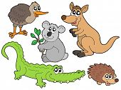 Australian animals collection - vector illustration.