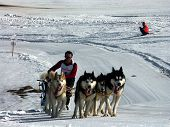 Musher In Action