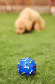 Pet Toy poster