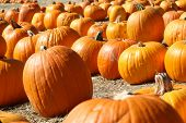 image of cornicopia  - Pumpkin Patch Goodies - JPG