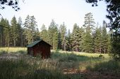 Rustic Wooden Building in The Wilderness
