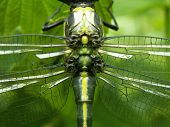 On The Wings Of A Dragonfly