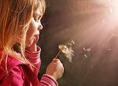 Magic light, little girl blowing dandelion at sunset