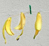 peel of a bananas hanging on line