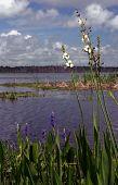 Marshland Blooms
