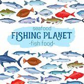 Fish, Vector Illustration. Seafood , Cartoon Salmon, Anchovy, Codfish, Sea Bass, Ocean Perch And Sar poster